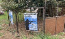 Animalisti contro le gabbie trappola per i cinghiali