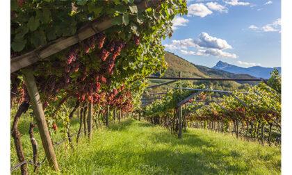Regione vitivinicola dell'anno: il Trentino si aggiudica il premio internazionale