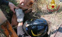 Cane precipita all'interno di un pozzo, salvato dai Vigili del fuoco