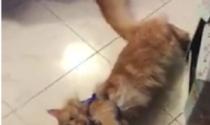 Simpatiche zampette quando il gatto proprio non vuole saperne di uscire.....