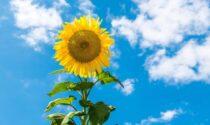 Torna il bel tempo nel fine settimana in Lombardia