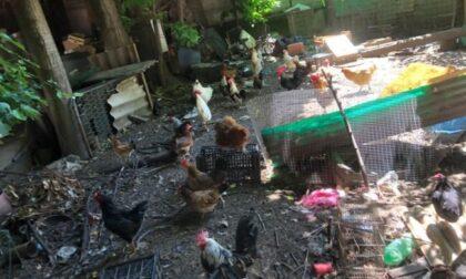 Orrore in Brianza: muore e in casa sua trovano 70 animali, scheletri e montagne di rifiuti