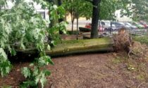 Grandine e pioggia nel Canturino: alberi caduti a Cantù, Cucciago e Grandate