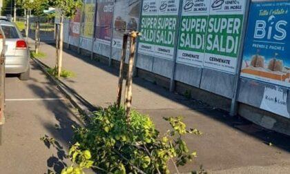 Vandali a Figino Serenza: spezzato un tronco di un albero e divelto un cartello