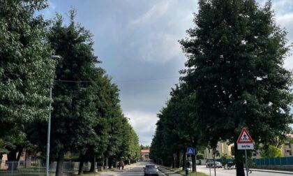 Figino, sotto attacco gli alberi in via De Gasperi e Colombo: al via il trattamento, le indicazioni per i residenti