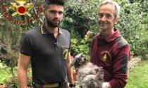 Cane cieco si perde nei boschi di Veleso: lo recuperano i Vigili del Fuoco