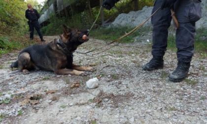 Droga nei boschi il cane Artù la trova in un nastro trasportatore